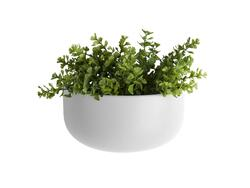 Wall plant pot globe oval wide white