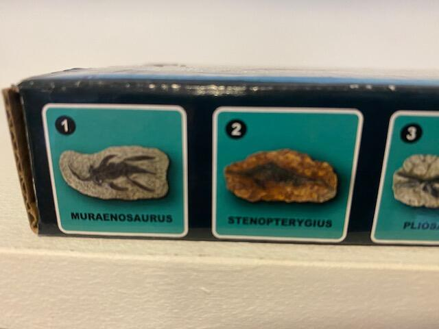 Sea Animal Fossil - Excavation Kit